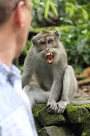 monkey-crazy